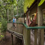 Narrows Escape Rainforest Retreatの写真