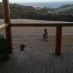 View from the deck with the local wildlife.