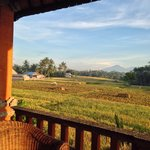 Great terrace with ricefield view.