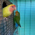 cute lovebirds