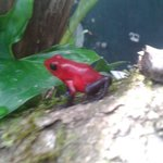 Photo of Monteverde Frog Pond
