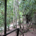 Foto de Amazon Ecopark Lodge