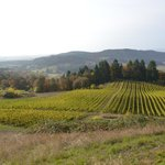 Foto de Youngberg Hill Vineyards & Inn