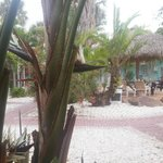 Bilde fra Tropical Breeze Resort