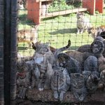cats at the gate