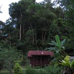 Photo de Park Lodge Taman Negara