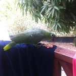 Silvio, our balcony visitor