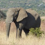 Elephant Rock Private Safari Lodge의 사진