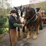 Roger and the shire horses