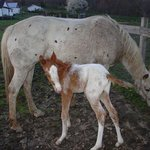 We even got to witness the birth of a new horse named Spirit during one of our visits
