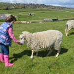 Making friends with Ewe!