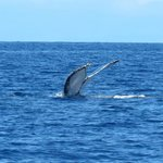 Whale from dive boat