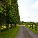 """""""Driveway to Cottage"""""""