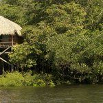 Juma Amazon Lodge resmi