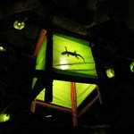 a lime coloured lantern with a gekko inside