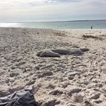 Hyams Beach Seaside Cottages照片