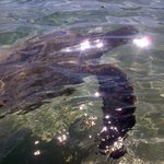 Black Rock, Maui, Turtles, Experience, Hostel, Wildlife, Banana Bungalow, Beaches, Tours, Hawaii