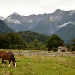 Bilde fra Fox Glacier TOP 10 Holiday Park