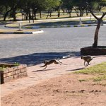Foto de Golden Leopard Resort - Manyane