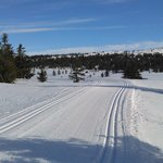 Perfect tracks on the route to Sjusjoen