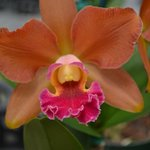 One of many varieties of orchids