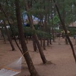 Jungle Lodges Devbagh Beach Resort의 사진
