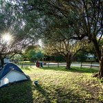 Photo of Camping Valle dei Templi