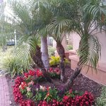 Foto de Residence Inn by Marriott Orlando Lake Mary