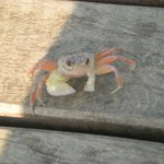 There are little crabs everywhere - so cute!