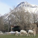 Foto van Waterton Lakes Lodge Resort