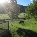 Foto de Avoca House & Cottage Accomm Wollombi