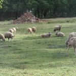 Foto Ekala Guest Farm and Eco Tours