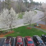 Homewood Suites by Hilton Boston - Billerica Foto