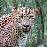 Sri Lanka For Vacation - Day Tours