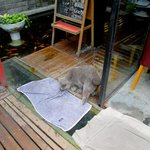 The cat drying itself next to the fish pond after it rained