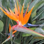 Bird of Paradise Cap Farrat