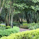 Foto di Fairmont Mara Safari Club