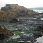 Photo de Curio Bay Boutique Accommodation