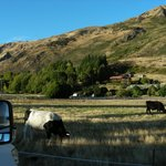 Foto de Wanaka Top 10 Holiday Park
