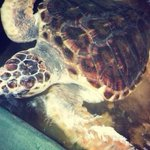 Sea Turtle Protection Association Foto