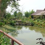 Photo de Maekok River Village Resort