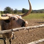 Feeding the Longhorns 05.2014