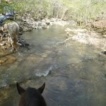 3 hr horse ride thru streams n more