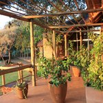 Marula Cottage Guest Lodge의 사진