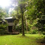 Ferntree Rainforest Lodge의 사진