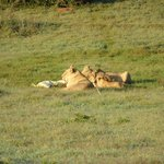Bilde fra Schotia Safaris Private Game Reserve