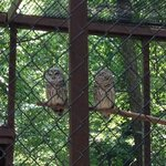 Boys loved the owls