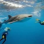 George and Jimmy's Whalewatching Resort - Day Tours