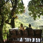"The ""Tree House"" at Queens Garden Resort, Saba"