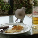 Cheeky dove eyeing up my lunch!